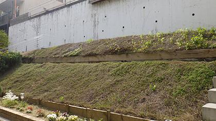 大阪庭作り芝張り前
